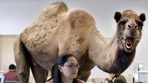 Hump Day Camel Meme - 10 of my favorite motivational quotes to help you through this