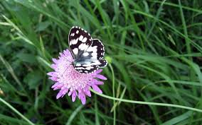 new butterfly pictures wallpaper butterfly flower high
