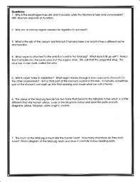 fetal pig anatomy and simulated dissection worksheet by biology buff