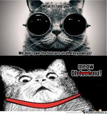 Morpheus Cat Meme - rmx morpheus cat will show cats the real world by archerjoe