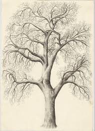 97 best trees images on pinterest draw drawing and drawing trees