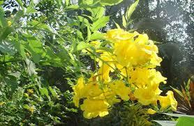 arizona landscaping plants for mid summer color desert crest press
