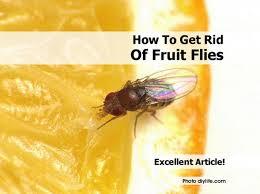 Getting Rid Of Flies In Backyard Flies On Patio Get Rid Of Best 20 Black Fly Ideas On Pinterest