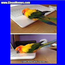 Funny Bird Memes - bird warmer clean memes