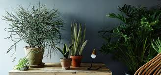 12 aesthetic plants that don u0027t require sunlight and can beautify