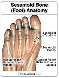 Foot Tendons Anatomy 104 Best Anatomy U0026 Radiology Images On Pinterest Radiology