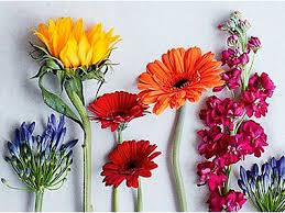 flowers images flowers u0026 plants online free next day delivery m u0026s