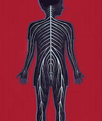 Human Body Anatomy Pics Illustrating Tinybop U0027s 1st App Kelli Anderson