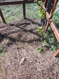 landscape fabric alternatives tired of weeding cardboard the eco friendly weed barrier