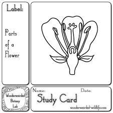 best 25 parts of a flower ideas on pinterest reading garden