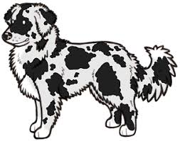 australian shepherd outline dog coat colour genetics