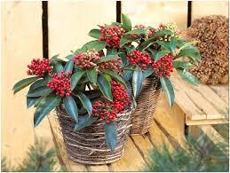 winterharte pflanzen balkon winterharte pflanzen möbel ideen und home design inspiration