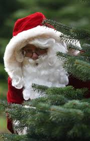 santa fir christmas tree farm guildford surrey sussex london