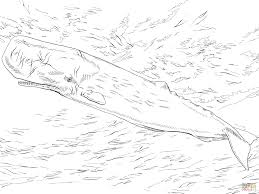 whale or cachalot coloring page free printable coloring pages