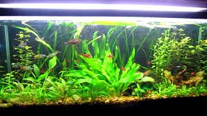Aquascaping Techniques Tips And Tricks To Successful Aquascaping Freshwater Youtube