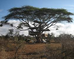 ief r d tree house remote solar