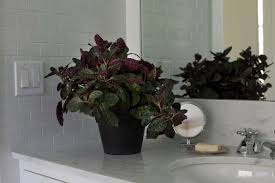 low light flowers best houseplants 9 indoor plants for low light gardenista