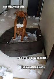 Welcome Home Meme - welcome home dog meme