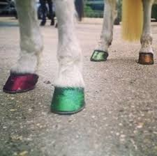 glitter hoof oil balm only 4 99 at equifashion