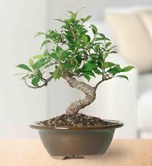 best low light indoor trees best indoor trees low light houseplants plants for gardenista of my