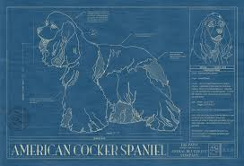 cocker spaniel american animal blueprint company american cocker spaniel dog blueprint