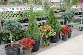 Design Your Backyard Online by Garden Design Garden Design With Wonderful Rustic Landscape Ideas