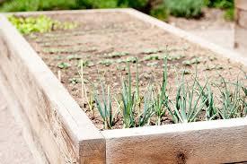 Urban Garden Denver - sanctuary community garden denver urban gardens