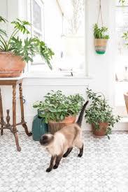 photos de verandas modernes best 20 véranda victorienne ideas on pinterest maison terrasse