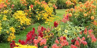 25 best fall flowers u0026 plants flowers that bloom in autumn