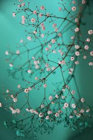 turquoise flowers gypsophila muralis turquoise flowers and mosaics