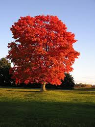 fastest growing trees will add instant to your landscape