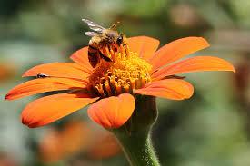 connecticut native plants connecticut garden journal growing plants for bees wnpr news