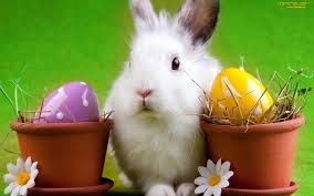 images of the easter bunny free download happy new year 2018