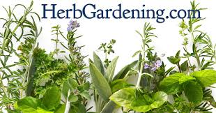 How To Build An Herb Garden Herb Gardens How To Grow Herbs Indoors And Out