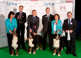 australian shepherd crufts 2016 kennel club announces breeders heading to crufts for competition