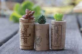diy succulent wine cork planters do it yourself projects lonny
