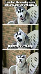 Pun Husky Meme - 351 best hahaha images on pinterest ha ha funny stuff and funny