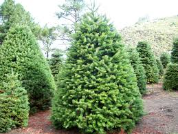stunning decoration natural christmas tree recycling christmas decor