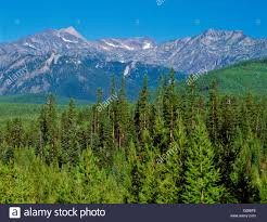 Montana forest images Cabinet mountains in kootenai national forest near libby montana jpg