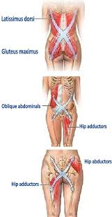 Anatomy Of Human Back Muscles 9 Best Anatomy Trains Images On Pinterest Massage Therapy