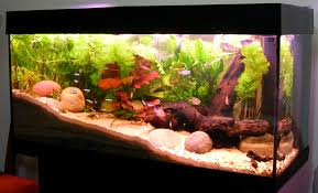 How To Clean Fish Tank Decorations Fishkeeping Wikipedia
