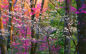 spring forest trees nature hd 4k wallpapers
