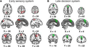 network configurations in the human brain reflect choice bias