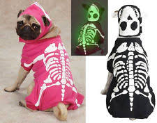 Glow Dark Halloween Costumes Skeleton Costumes Dogs Ebay