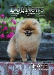 affenpinscher webster s dog news october 19 2012 by dn dog news issuu