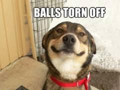 Smiling Dog Meme - smiling animal memes image memes at relatably com