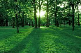 celine dion private island fondo pantalla parque atardecer naturaleza pinterest