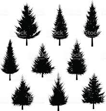 evergreen tree clip art vector images u0026 illustrations istock