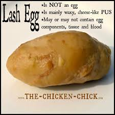salpingitis u0026 lash eggs in backyard chickens the pus coagulegg