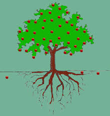 For A Tree Understanding Wisdom Page The Wisdom Institute And Becoming